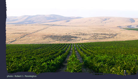View of mountains and vineyard